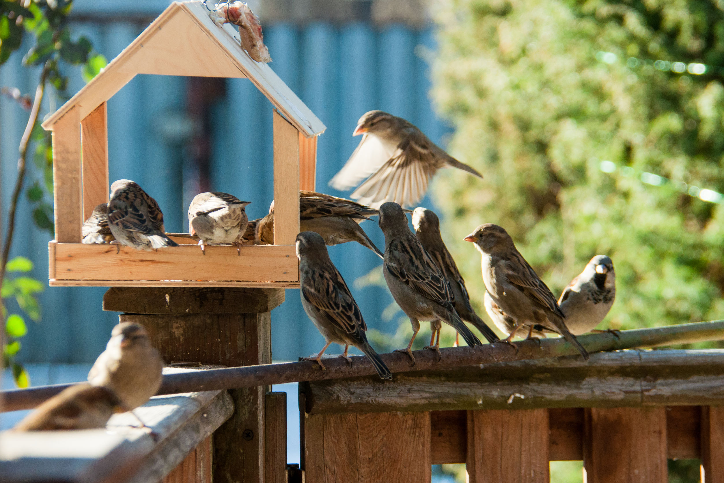 Best Bird Feeders of 2021: The ultimate guide