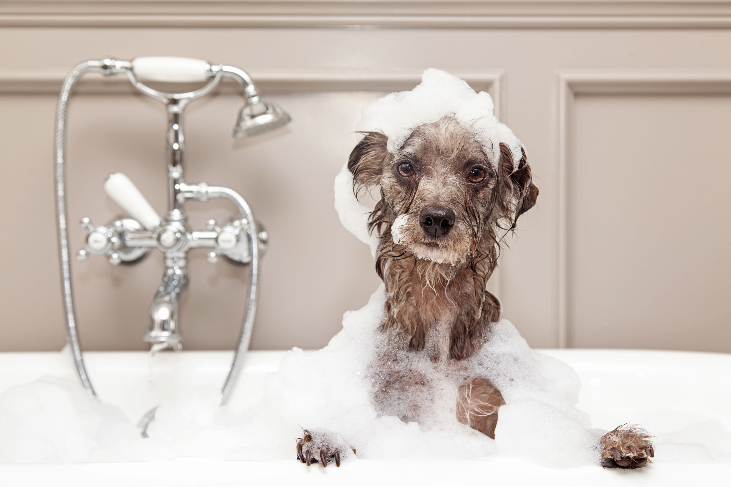 Best Dog Shampoo 2020: The ultimate guide