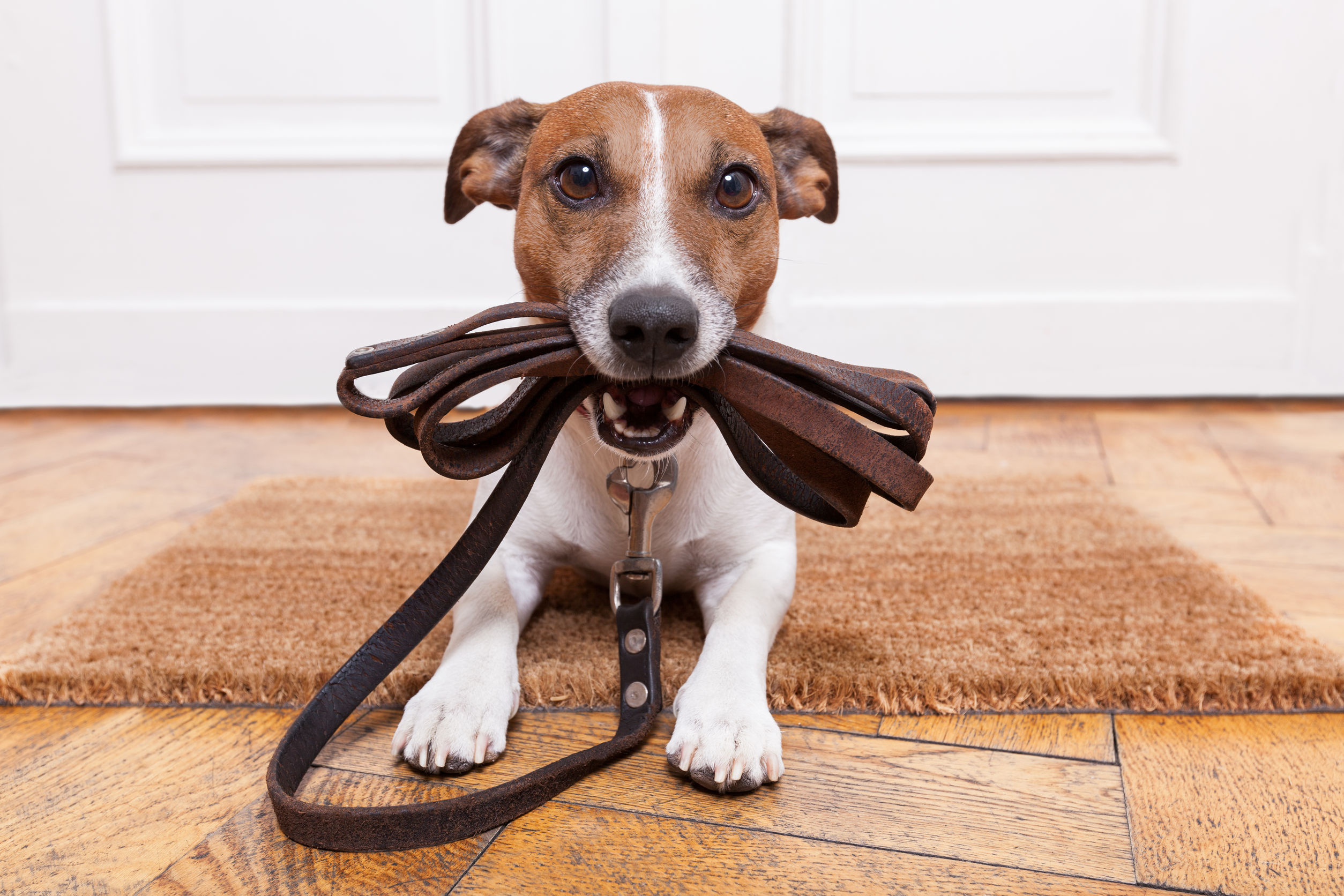 Best Dog Lead 2021: The ultimate guide