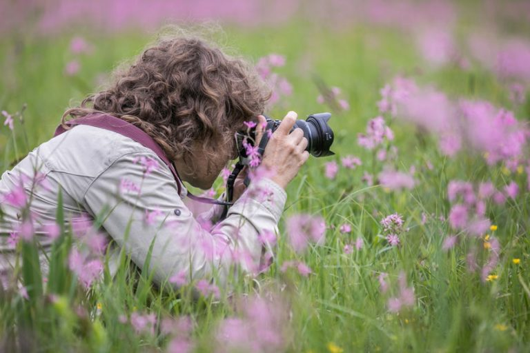 A woman takes pictures sitting between pink flowers in a meadow. Podlasie. Podlachia. Poland, Europe. The region is called Podlasko or Podlasze