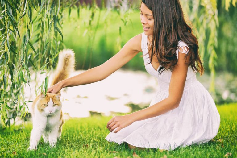 Cat woman cute spring portrait petting her animal outsisde in garden grass green park. Asian girl pet owner caressing kitten. Summer lifestyle outdoor.