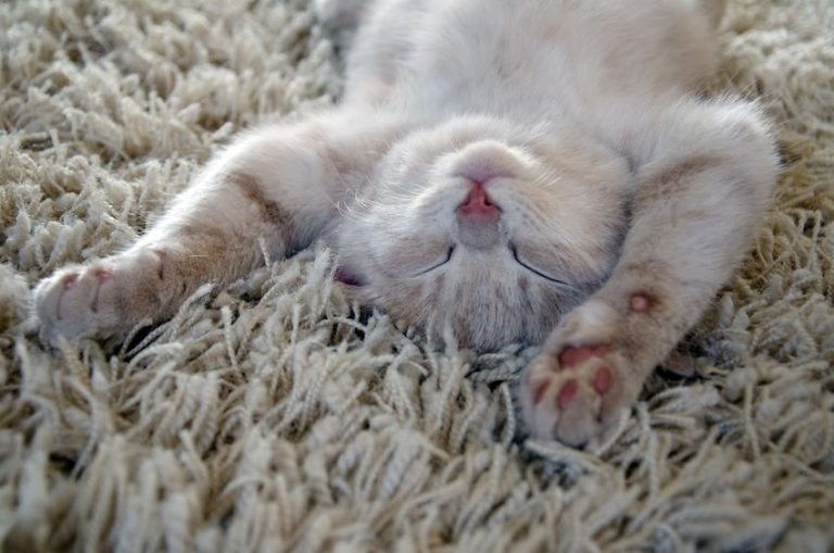 kitten sleeping on carpet